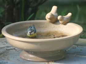 Abreuvoir Haîti pour oiseaux