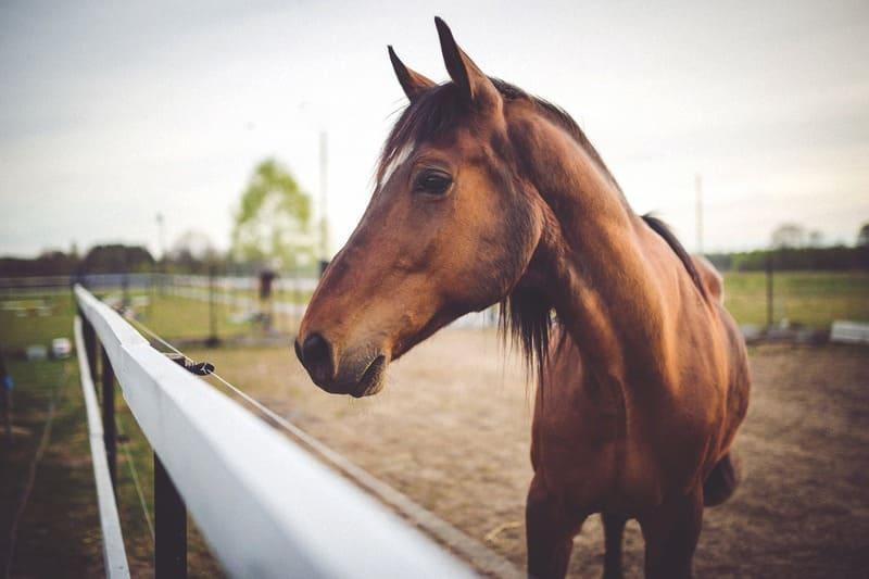 Un accompagnement d'expert pour une plus longue vie de vos chevaux